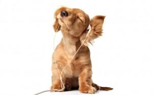 Podcast listener!